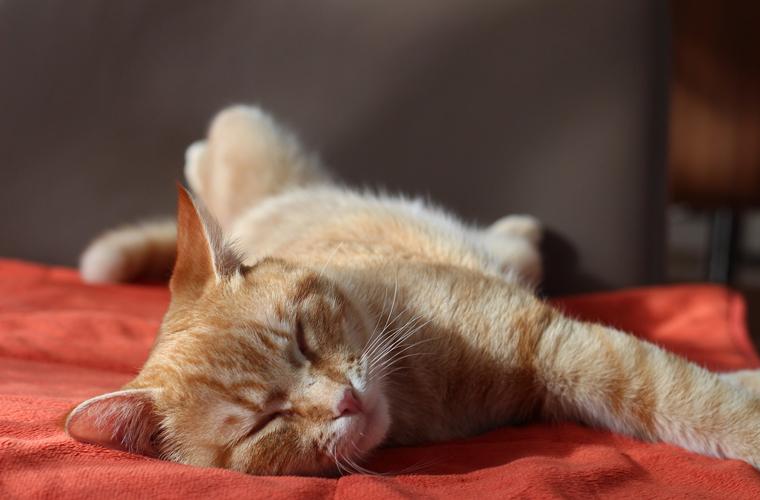 貓抓布抗磨係數高、厚實、防水