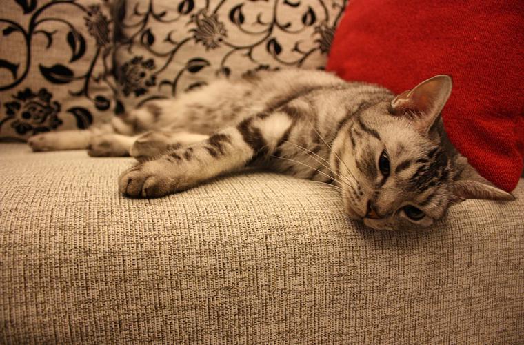 高耐磨的貓抓布係數不易起毛球,對尖銳物傷害容忍性較高