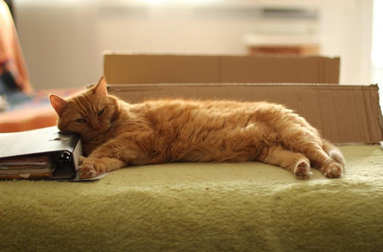 沙發面料觸感也相當柔順,不會有刺刺的感受